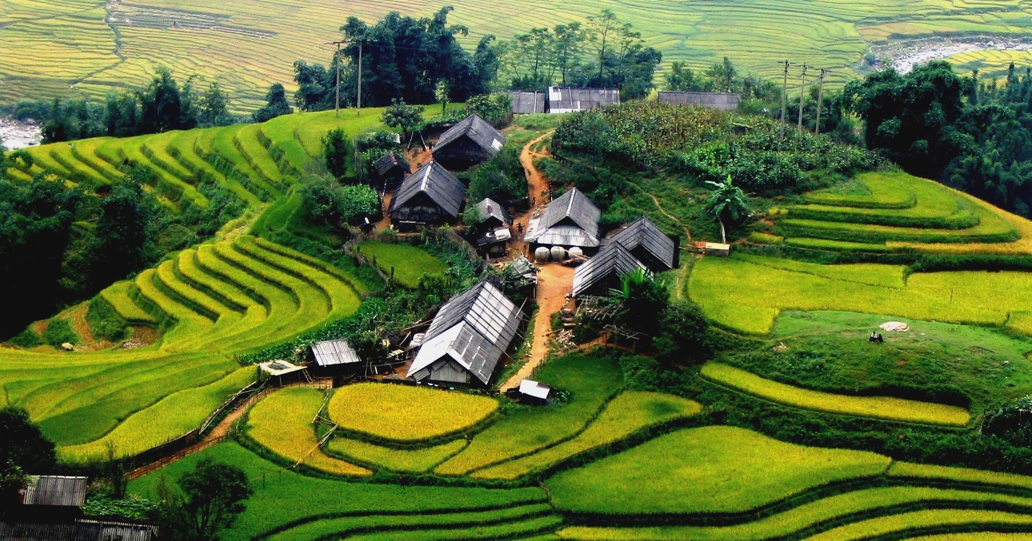 sapa-rice-field