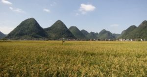 33-bac-son-rice-field
