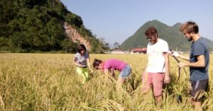 36-bac-son-rice-field